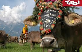 fête de la transhumance du Tyrol